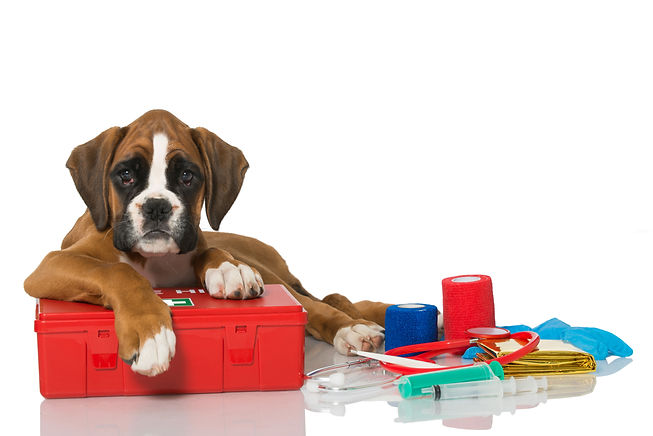 Puppy with first aid kit.jpg