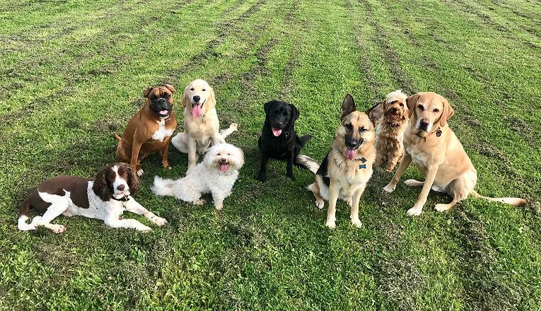 Doggy Daycare, Castle Donington