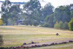 FR House in mist w wallabies.jpg