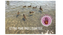Reiki & OCD: Letting your Ducks Roam Free