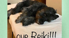 Animals Love Reiki too!