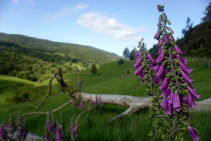 Northland Flowers