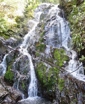 Tanekaha Falls
