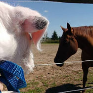 Maddy and horse.jpg