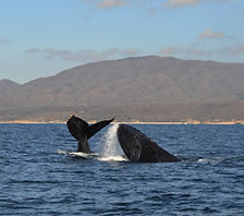 Friendly whale watching