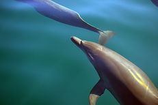 dolphins and marine life tours