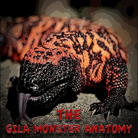 The Gila Monster Anatomy