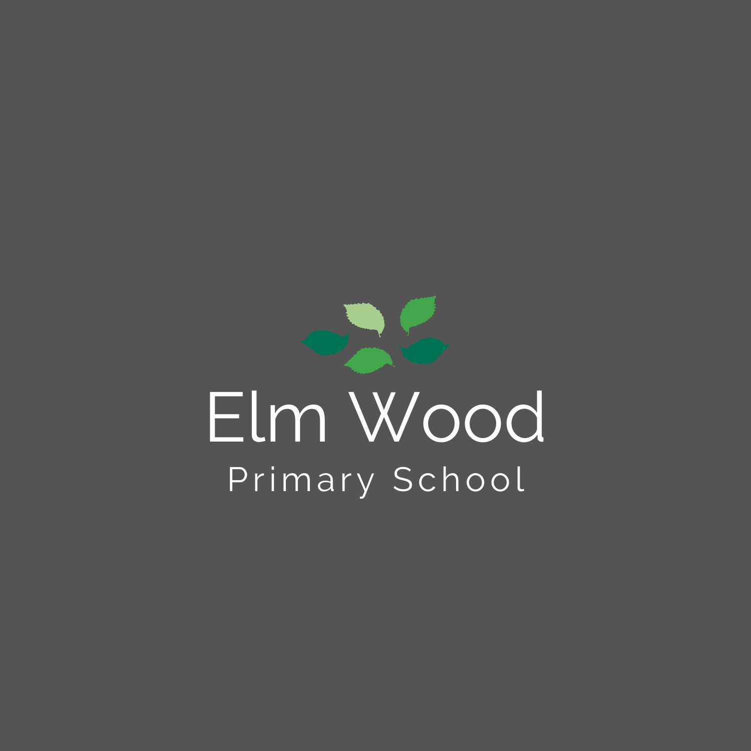 Elm Wood - colour