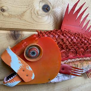Rockfish-Close up