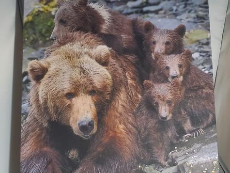 Quadruplet Family Portrait