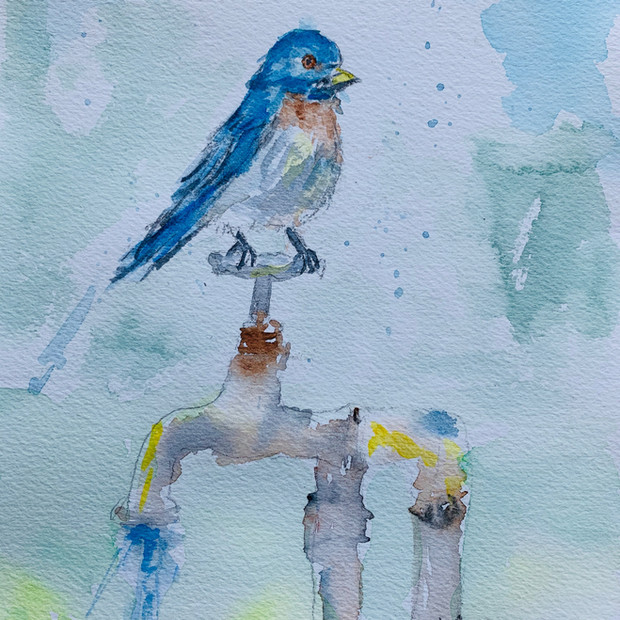 Bluebird Shower Fun
