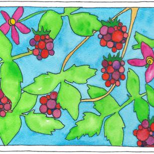 Salmonberry Season