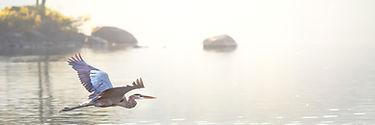 Blue Heron Sunrise.jpg