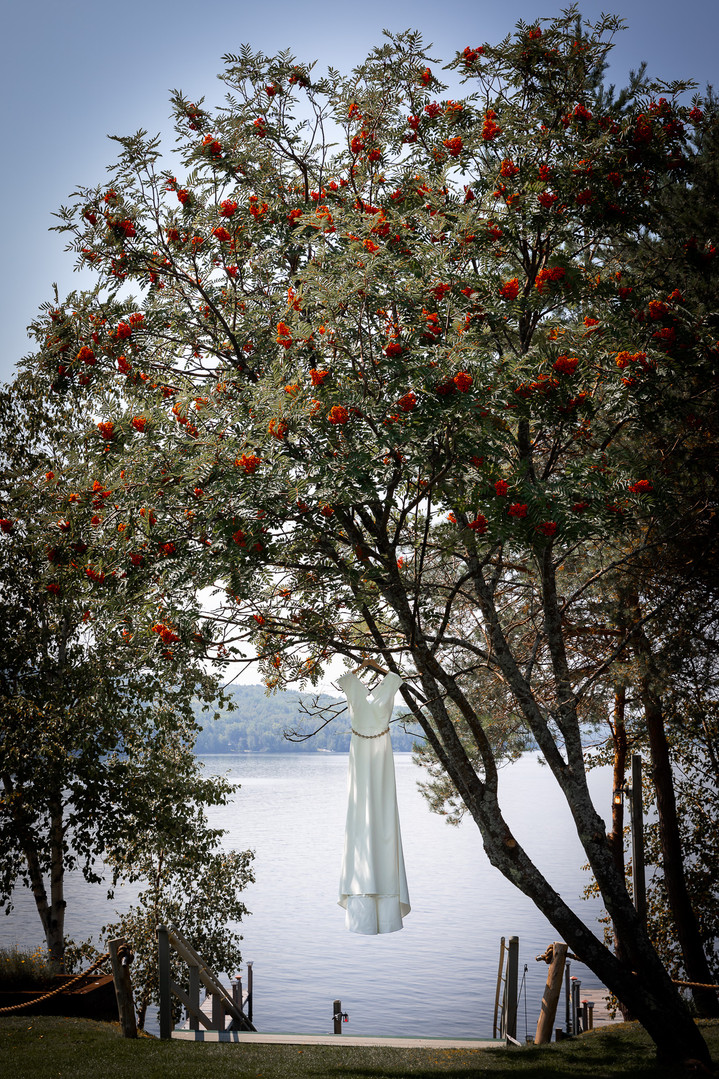 The bridal gown on a tree