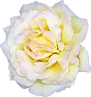 flower-1781059_1920.png