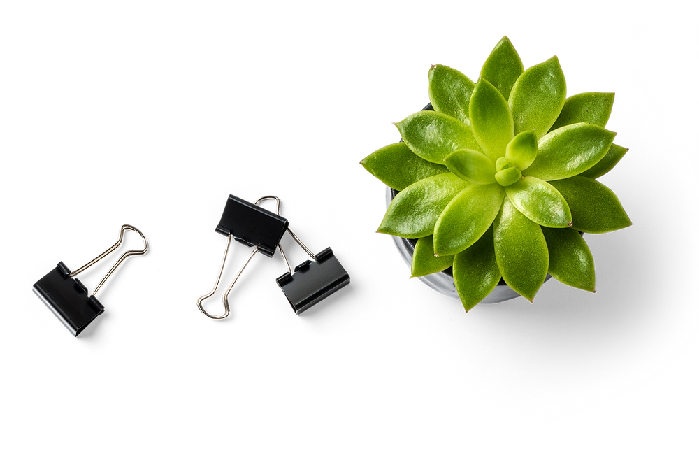 succulents and your personal finance