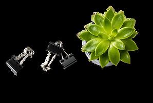 Plante succulente et pinces pour reliure