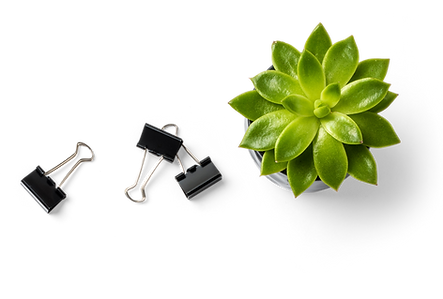 Succulent Plant and Binder Clips