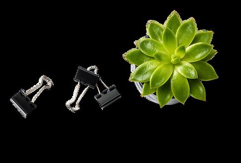Plantas suculentas y clips de carpeta