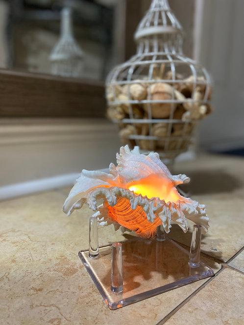 Murex Shell Candle
