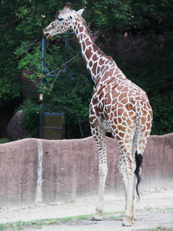 Get your Wild on at the STL Zoo