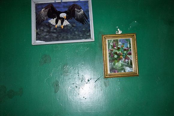 Bald Eagle on Green Wall, La Habana, Cuba