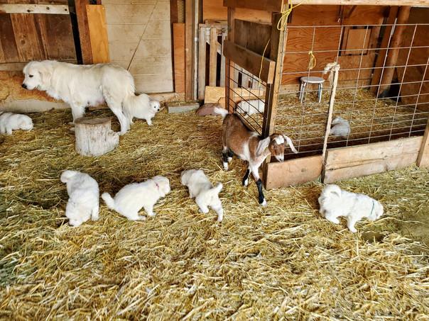 Out exploring the Goat Pen