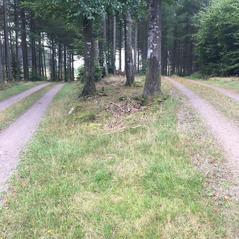 Gravel bikepacking i Skåne og Halland