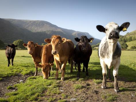 Back British Farming Day 2019