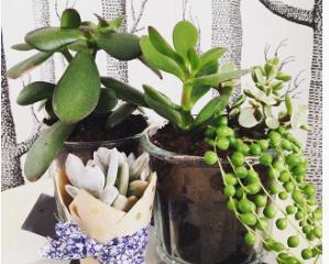 DIY : atelier brocante et succulentes