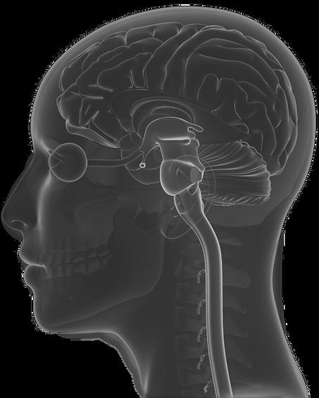 Brain-Stem-Injury-1030x1030_edited_edite
