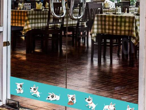 Empresa de Florianópolis cria adesivo que evita choques de cães e gatos contra vidros