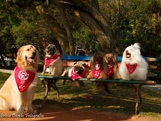 Outubro Patinhas Rosas: campanha de prevenção ao câncer em pets