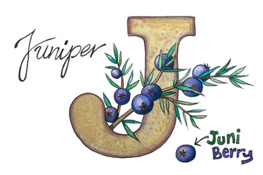 J is for Juniper