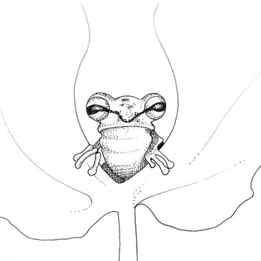 Froggin