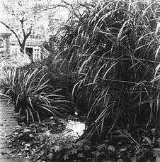 jardinvalk.jpg