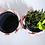 Thumbnail: PiCo Pot