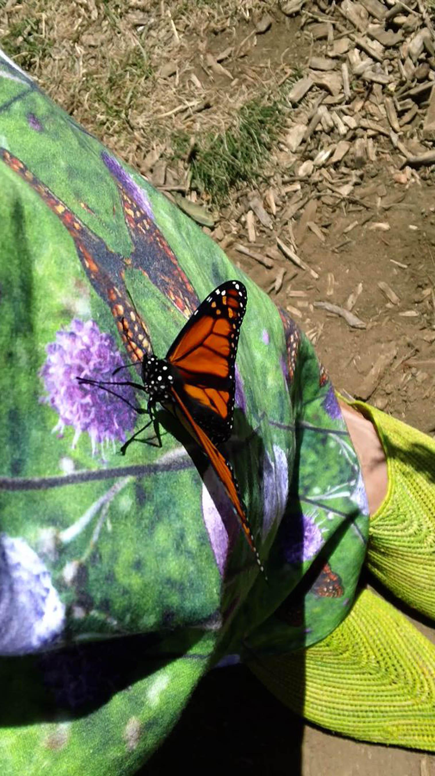 Ingham-Monarch Butterfly on Pollinator Frock .jpeg