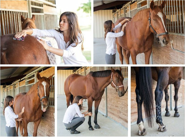 Bodywork Sessions For Horses in Houston TX