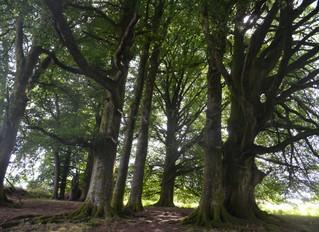 Digital Detoxification on Dartmoor