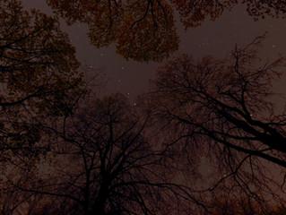 Prehistoric Stargazing