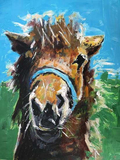 Shetland Pony.  SOLD