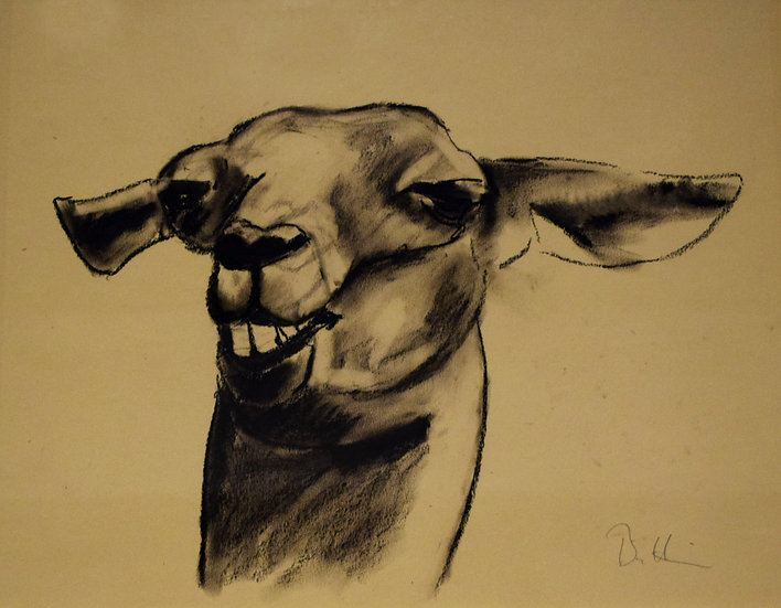 Llama.  charcoal on paper.   SOLD