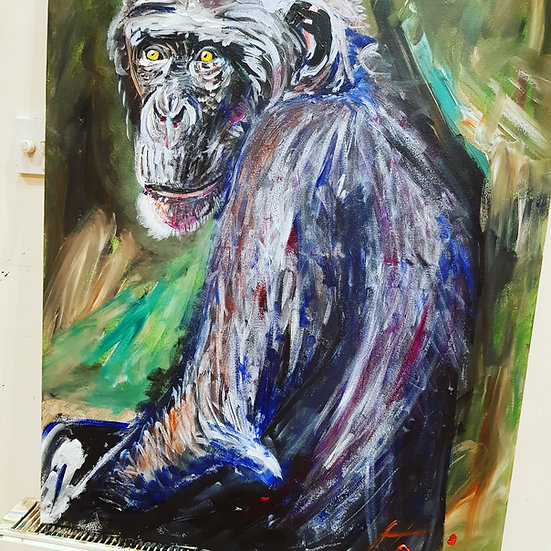 Large adult chimp