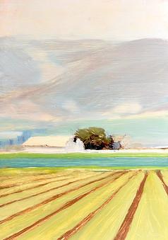 Wide Open Fields