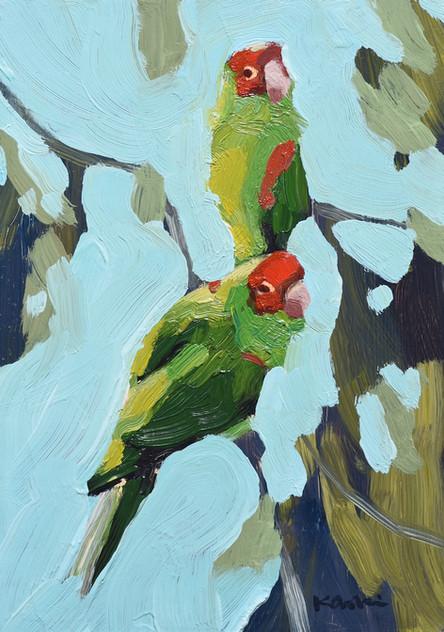 Parrot Pair #5