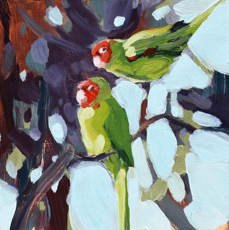 Parrot Pair #1