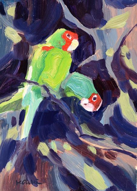 Parrot Pair #6