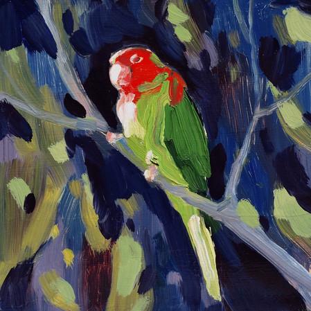 Parrot #1