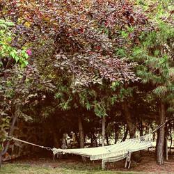 Tranquillity hammock under the trees 🤗🐦🌳🍒🙏 Sakinlik ağaçların altındaki hamakta _#bozcaada #sak